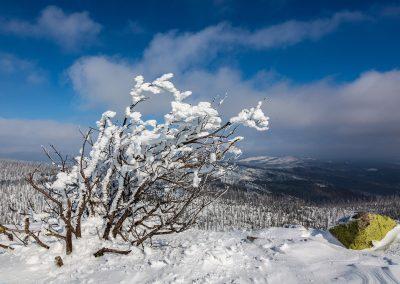 Winterl1